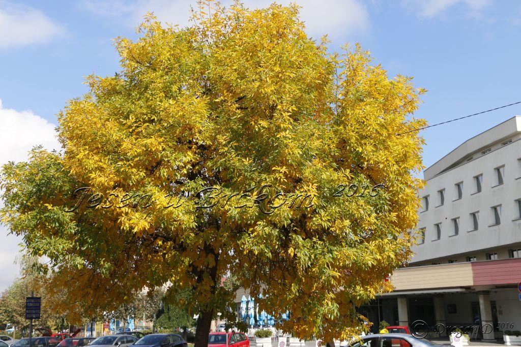 Photo of Сутра почиње јесен