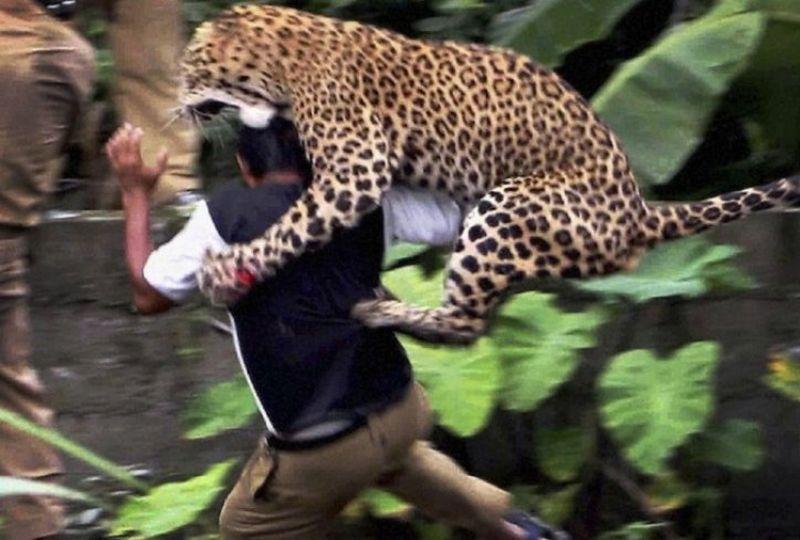 Photo of Убијена тигрица – људождерка