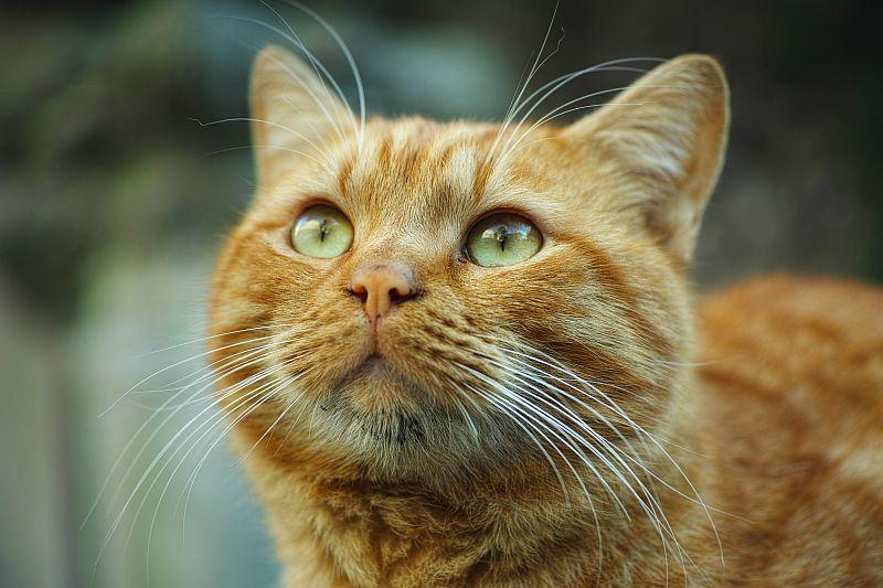 Photo of Nekoliko razloga zašto su mačke dobre za naše zdravlje