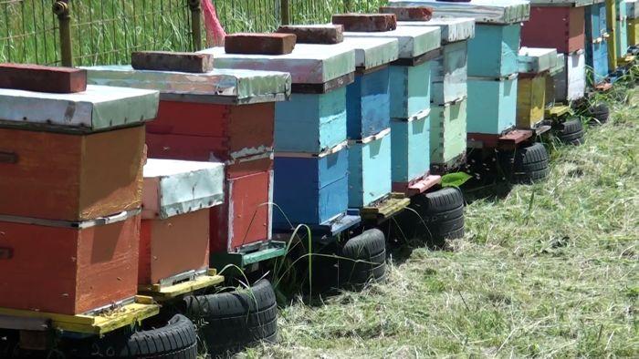 Photo of Pčelari Brčkog počeli pripreme za proljetnu ispašu