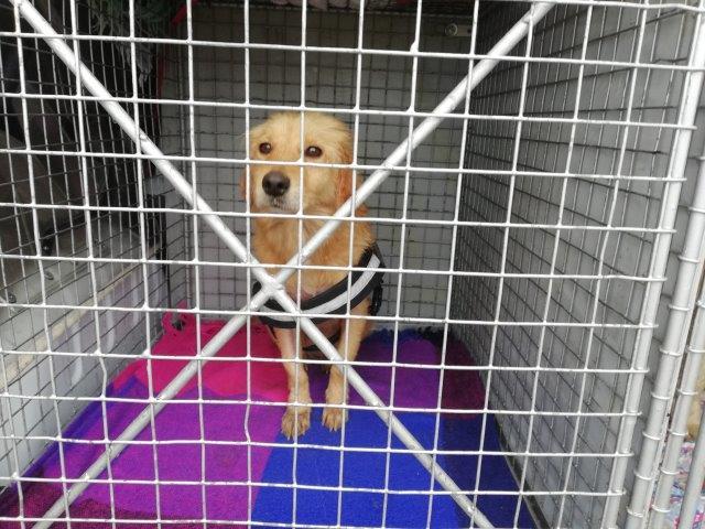 Photo of Пси из брчанског азила на путу ка аустријским домовима