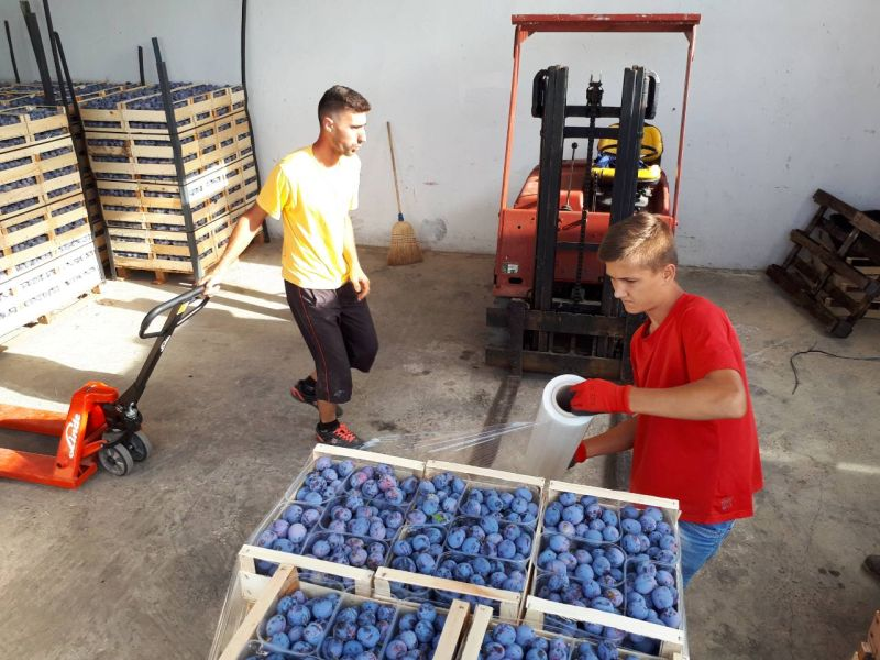 Photo of Predstavnici Uprave BIH za zaštitu zdravlja bilja u posjeti brčanskim izvoznicima voća