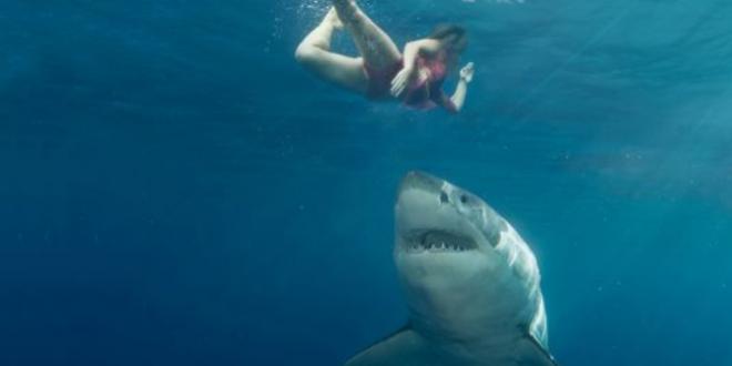 Photo of Аустралија: Два напада ајкула у току једног дана