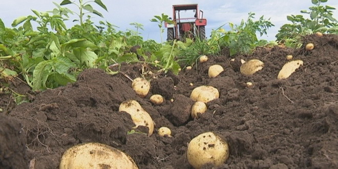 Photo of Poljoprivrednici u BiH zatrpani viškom mesa, mlijeka i krompira