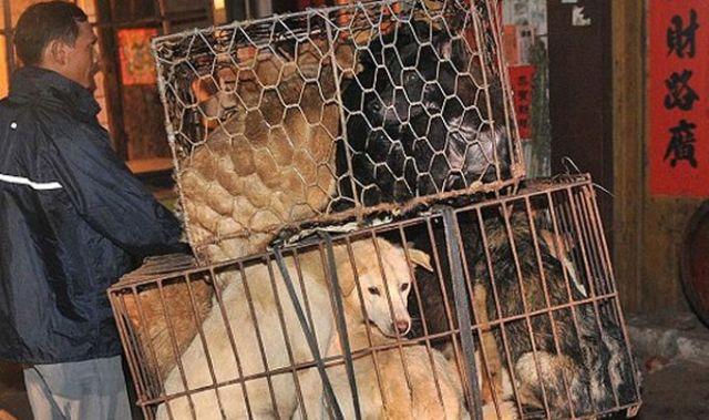Photo of Godišnje se u Aziji pojede više od 30 miliona pasa