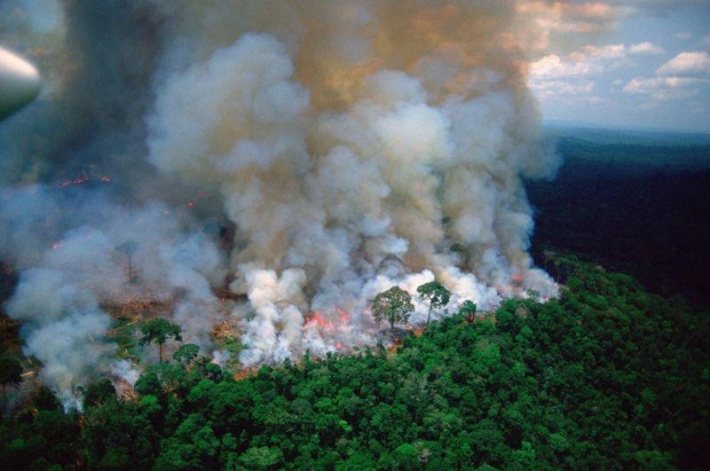 Photo of Amazonija: Šumski požari bi mogli prouzrokovati definitivno izumiranje pojedinih vrsta drveća