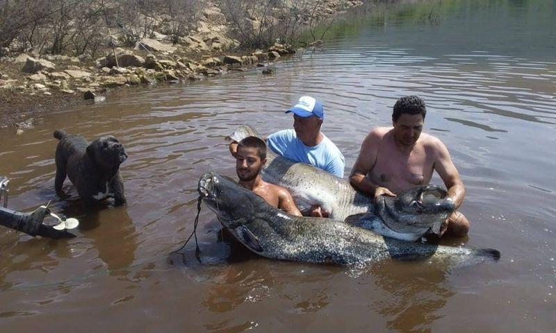 Photo of Na Bilećkom jezeru love somove teže od 50 kilograma