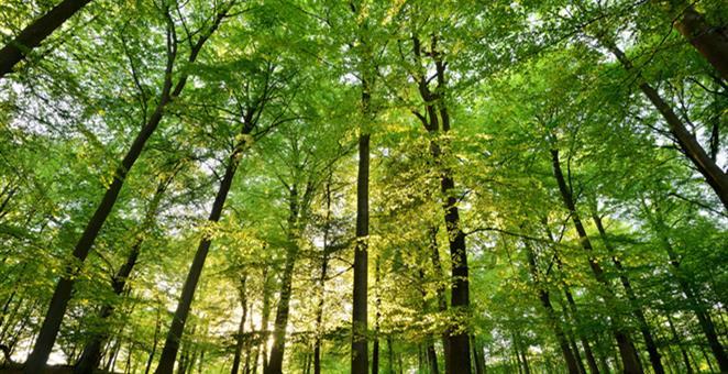 Photo of Smanjena ukupna proizvodnja i prodaja šumskih sortimenata u Federaciji BiH