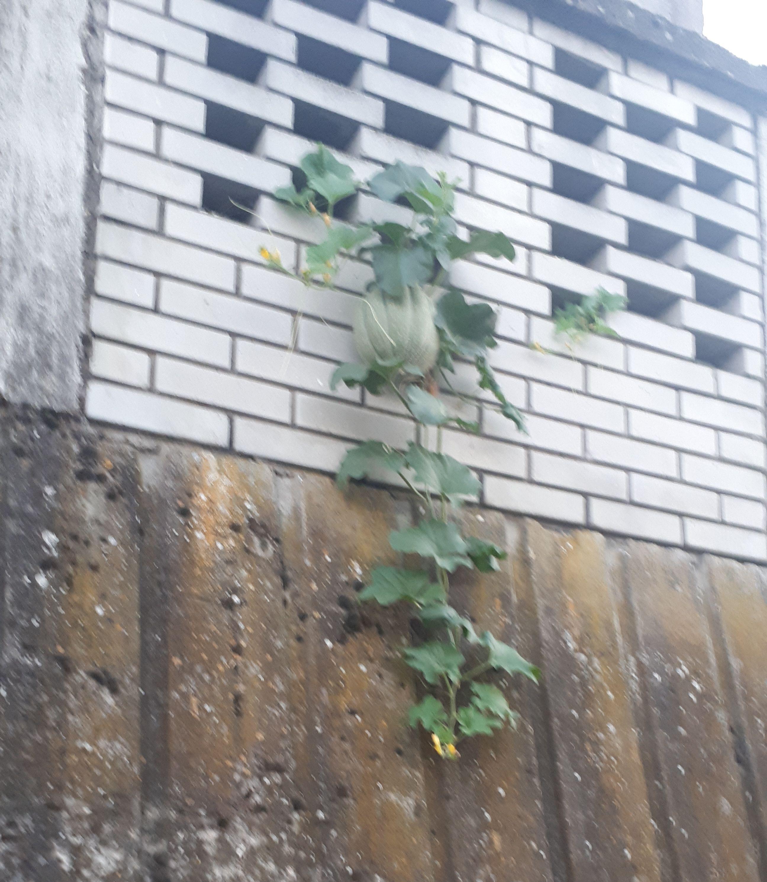 Photo of Na ogradi brčanske Zelene pijace!