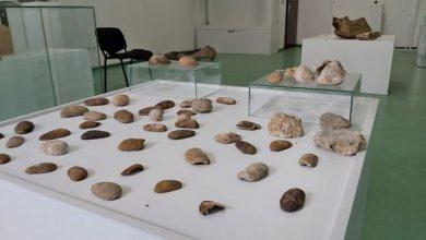Photo of Brčko: Gradski muzej priprema prvu prirodnjačku postavku