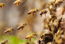 Photo of Svjetski dan pčela – Biljke i pčele prirodno povezane neraskidivom vezom