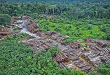 Photo of U Amazoniji kriminalna grupa posjekla 9.000 stabala starijih od 100 godina