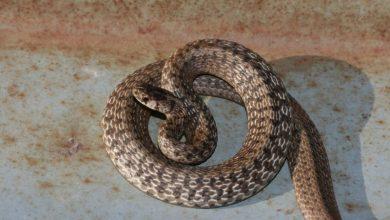 Photo of Brčko: Poziv na oprez zbog zmija i krpelja