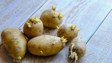 Photo of Uz pomoć jabuke sačuvajte čvrstoću krumpira i spriječite njegovo klijanje