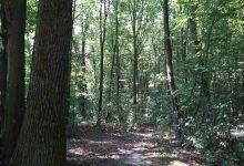 Photo of Brčko: Vlada usvojila Godišnji plan gospodarenja šumama