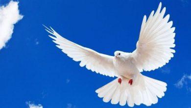 Photo of U svijetu se danas obilježava Međunarodni dan mira