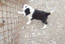 Photo of Brčko: Vlasnici pasa se u posljednje vrijeme sve češće odriču svojih ljubimaca
