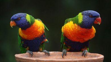 Photo of Papagaji uklonjeni iz parka nakon psovki posjetiocima