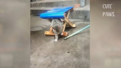 Photo of Životinje u smiješnim situacijama